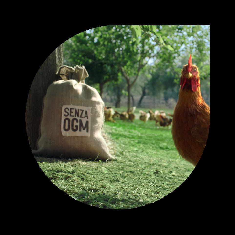 il-campese-senza-OGM
